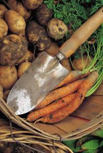 Sustainable-potatoes-and-carrots-in-basket