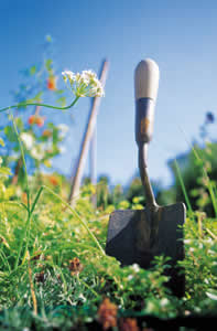 Sustainable-shovel-in-field